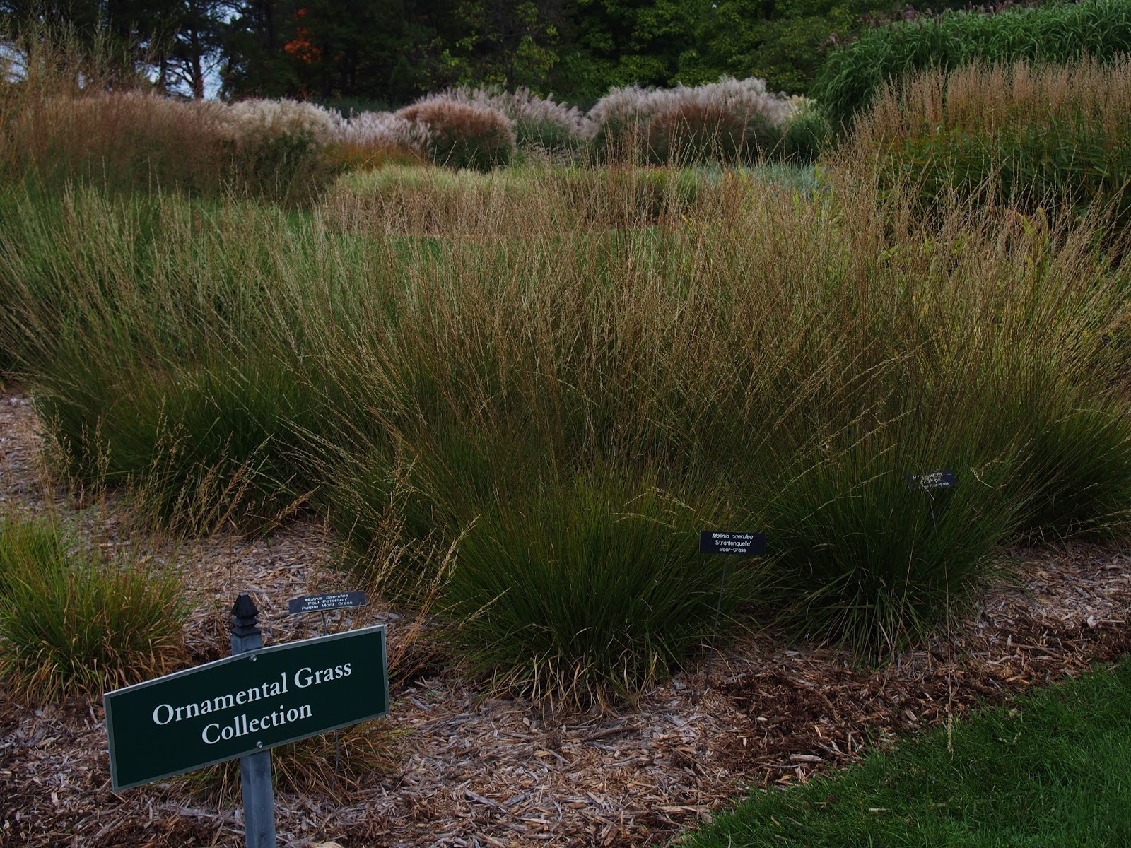 30th anniversary highlights ornamental grasses trend for for Variegated ornamental grass varieties