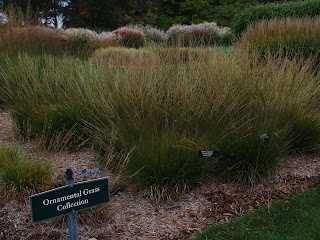 variety of grasses in landscape