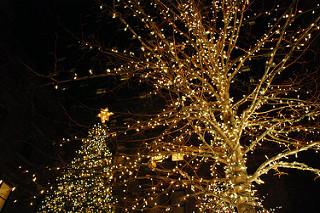 Árboles con luces de Navidad