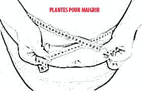 plantes pour maigrir