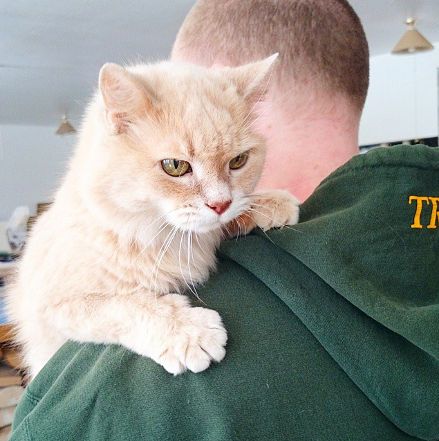 Wido Piddy, the Ever-Kitten