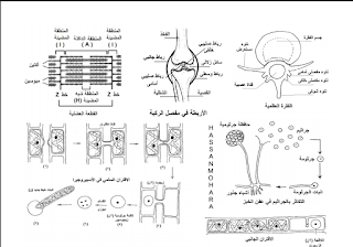 رسومات الاحياء للصف الثالث الثانوي للاستاذ حسن محرم 2019