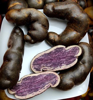 Wenccos potato, Potatoes Peru, 3.000 varieties of potatoe, Peru and the potatoe native