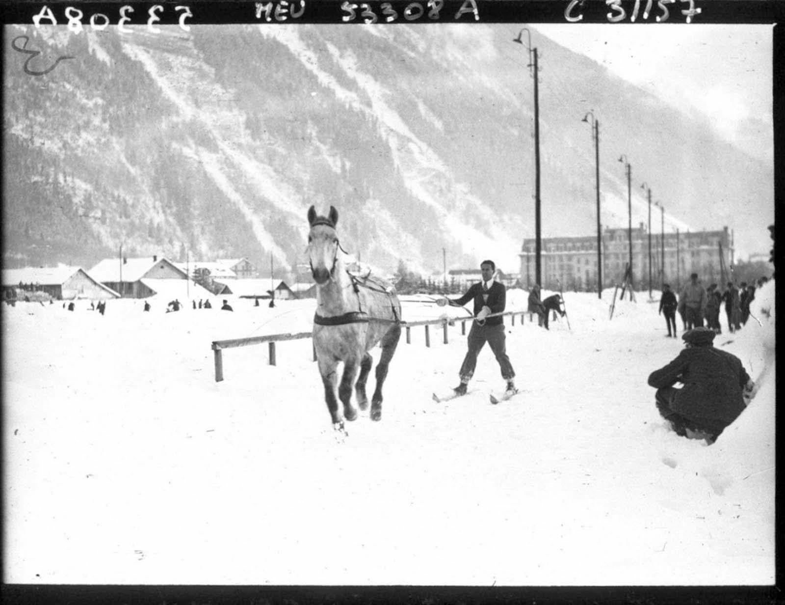 The skijoring belt worn by the skier is a wide waistband which is clipped around the skier's waist, and which may include leg loops to keep it in position.