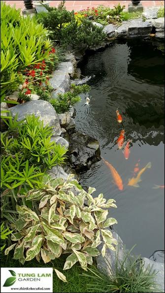 Thiết kế hồ cá Koi độc đáo, TungLam Garden, làm hồ cá Koi đẹp