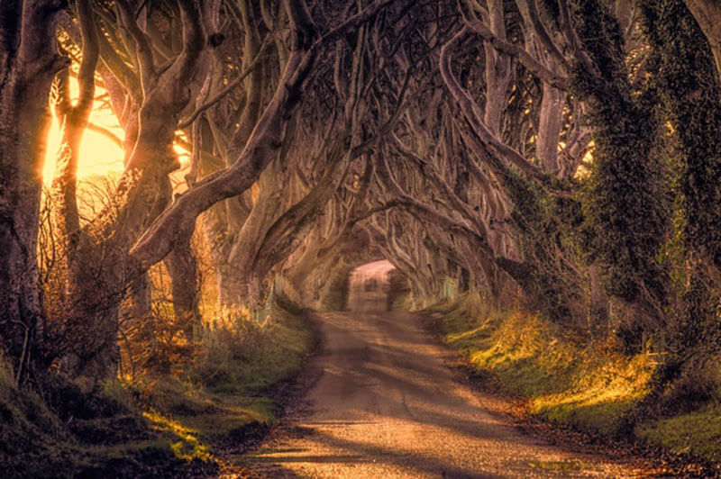 32 Stunning Places on Earth You Should Visit Before You Die - Dark Hedges, UK