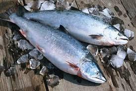 salmon menurunkan darah tinggi
