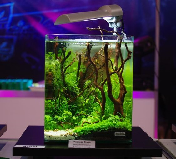 Inspirasi Aquascape Mini