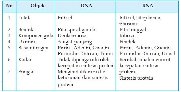 jelaskan perbedaan antara dna dan rna tuliskan dalam bentuk tabel