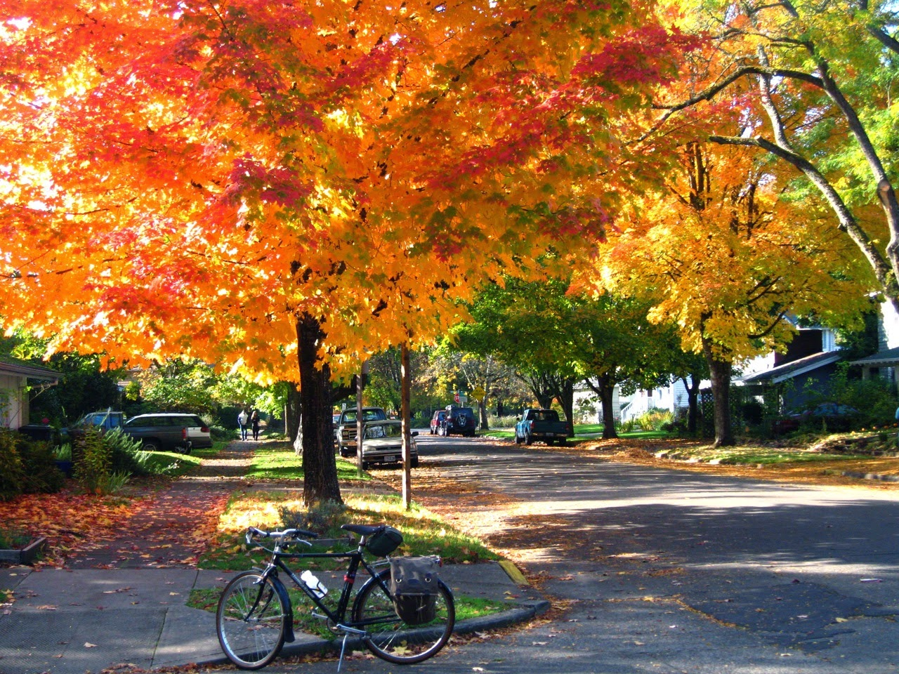 Bridgestone CB-Zip, fall color, Eugene Oregon, bicycle, trees, leaves, autumn, red