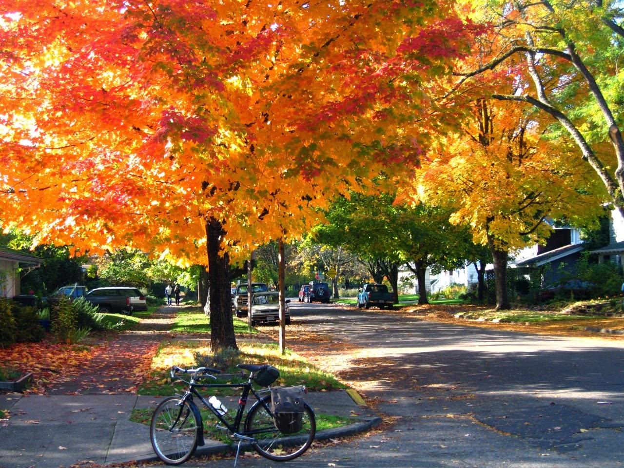 Origami Night Lamp: Autumn Bike Ride
