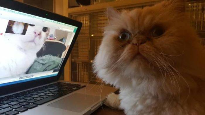 Funny cats - part 236, cute cat photos, best cat images, funny cat pics