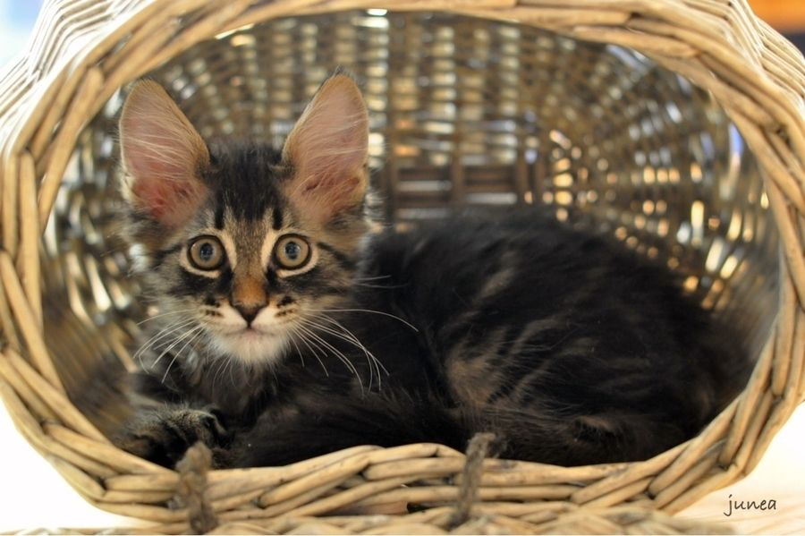 14. Kitten in the basket by June A