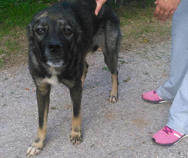 Άργος: Βρήκαν σκύλο με κομμένα αυτιά στην Πυργέλα