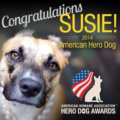 Susie American Hero dog of 2014