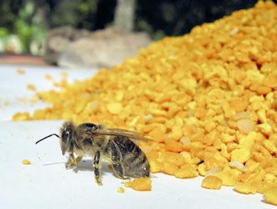 Το χρώμα γύρης που δίνουν τα μελισσοτροφικά φυτά
