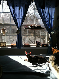 Kely and Sammy, two senior Cornish Rex, find a sun puddle