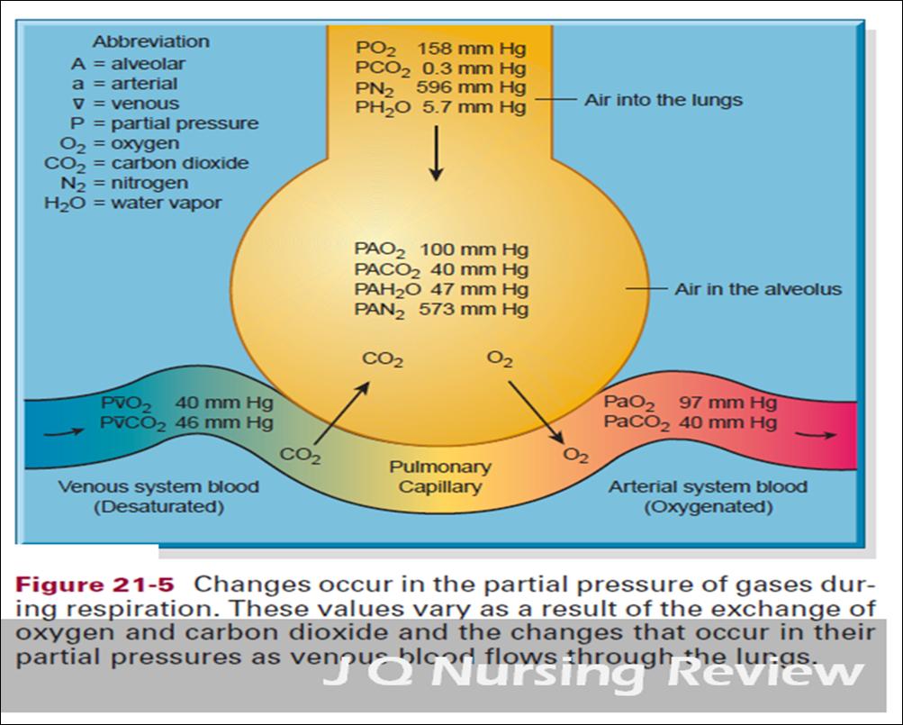 JQ Nursing Review: A&P Lecture 4.2: Gas Exchange