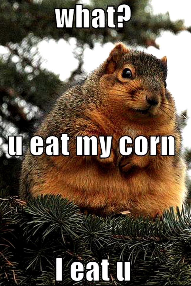 Humor Inspirational Quotes: Funny Image Gallery: Really Funny Animal Pictures