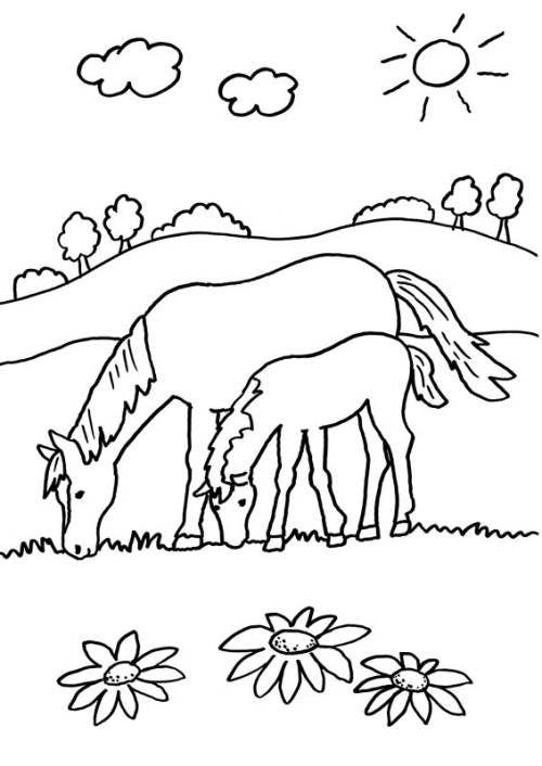 Tranh tô màu hai mẹ con ngựa ăn cỏ