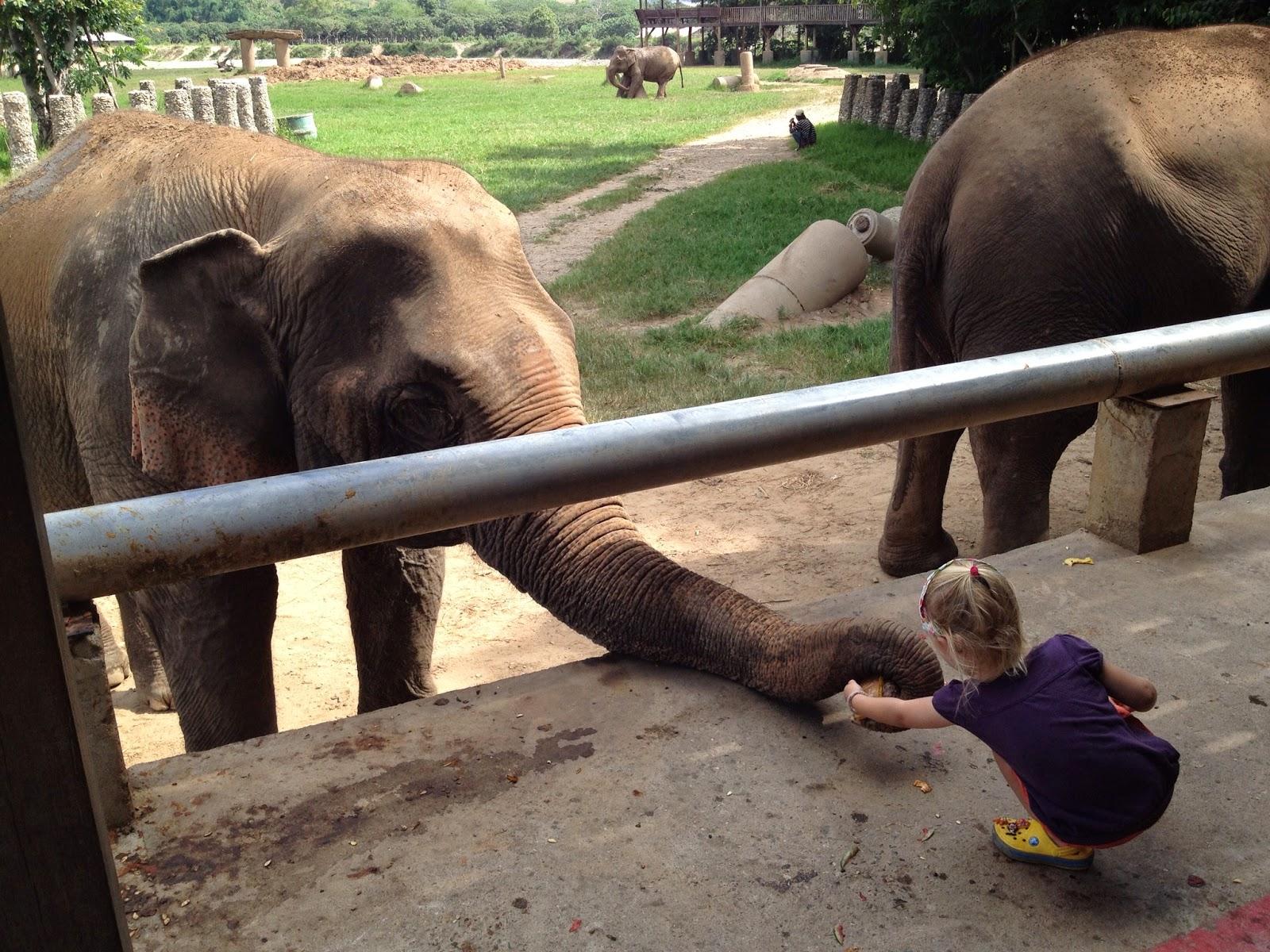 Chiang Mai - 3-year-old feeding an elephant