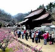国特別史跡旧閑谷学校で観梅の会開催
