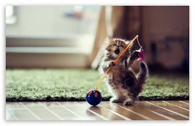 dancing-cat-with-its-ball-images