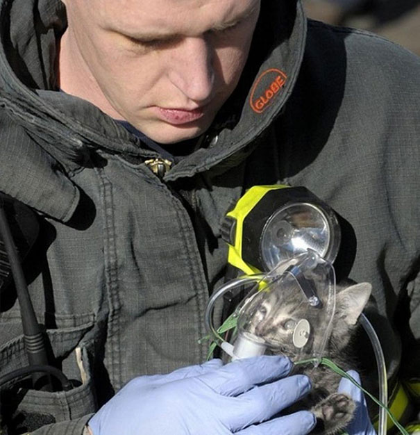 Firefighter administers oxygen to cat rescued from house fire.