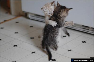 صور صور قطط كيوت 2020 خلفيات قطط جميلة جدا cats36.png