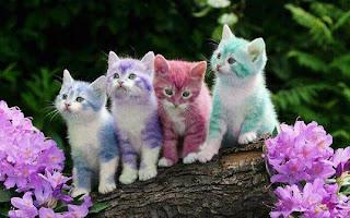 anak kucing berlainan warna