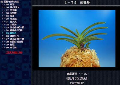 http://www.fuuran.jp/1-75.html
