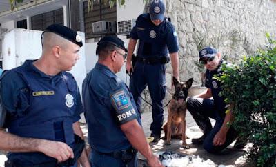 Cão 'Zeus' da GCM localiza drogas enterradas em horta no Alto do Flamboyant, em Limeir