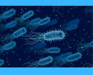 Bakteri merupakan organsime Prokariotik