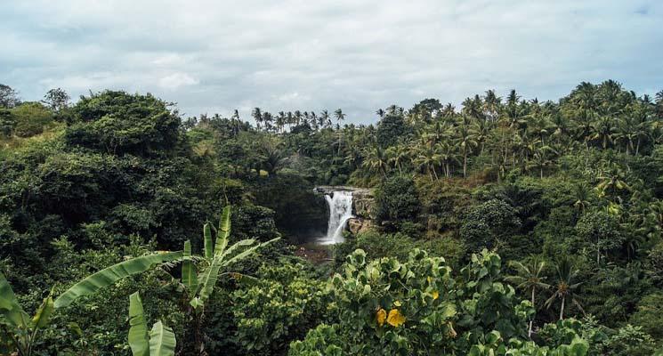 Pengertian dan Manfaat Sistem Penanaman Ganda Agroforestri