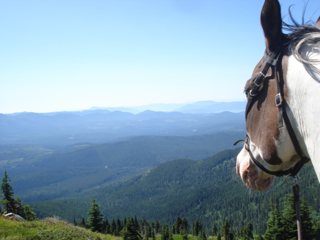Horsemanship Riding in the Mountains