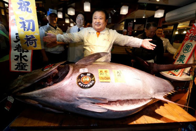 [Image: 750xauto-pria-ini-beli-seekor-ikan-tuna-...70107m.jpg]