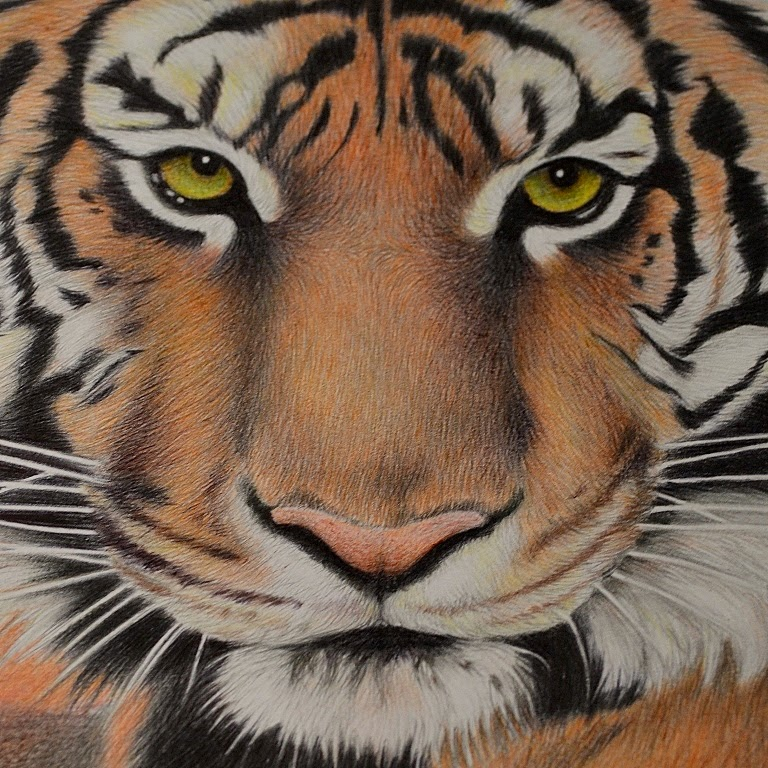 hogyan kell kezelni a pikkelysmr tigris szemvel