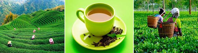 сколько чая можно пить в день