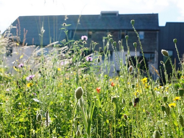 Devon Wildlife Trust. Wildflowers in the Cricklepit Mill Garden, Exeter