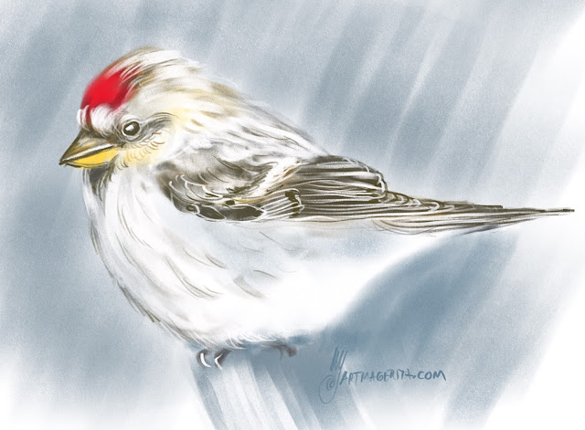 Arctic redpoll bird painting by Artmagenta