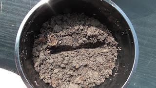 Подготовлена канавка для посева перцев глубиной 1 см