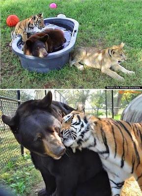 los mejores amigos