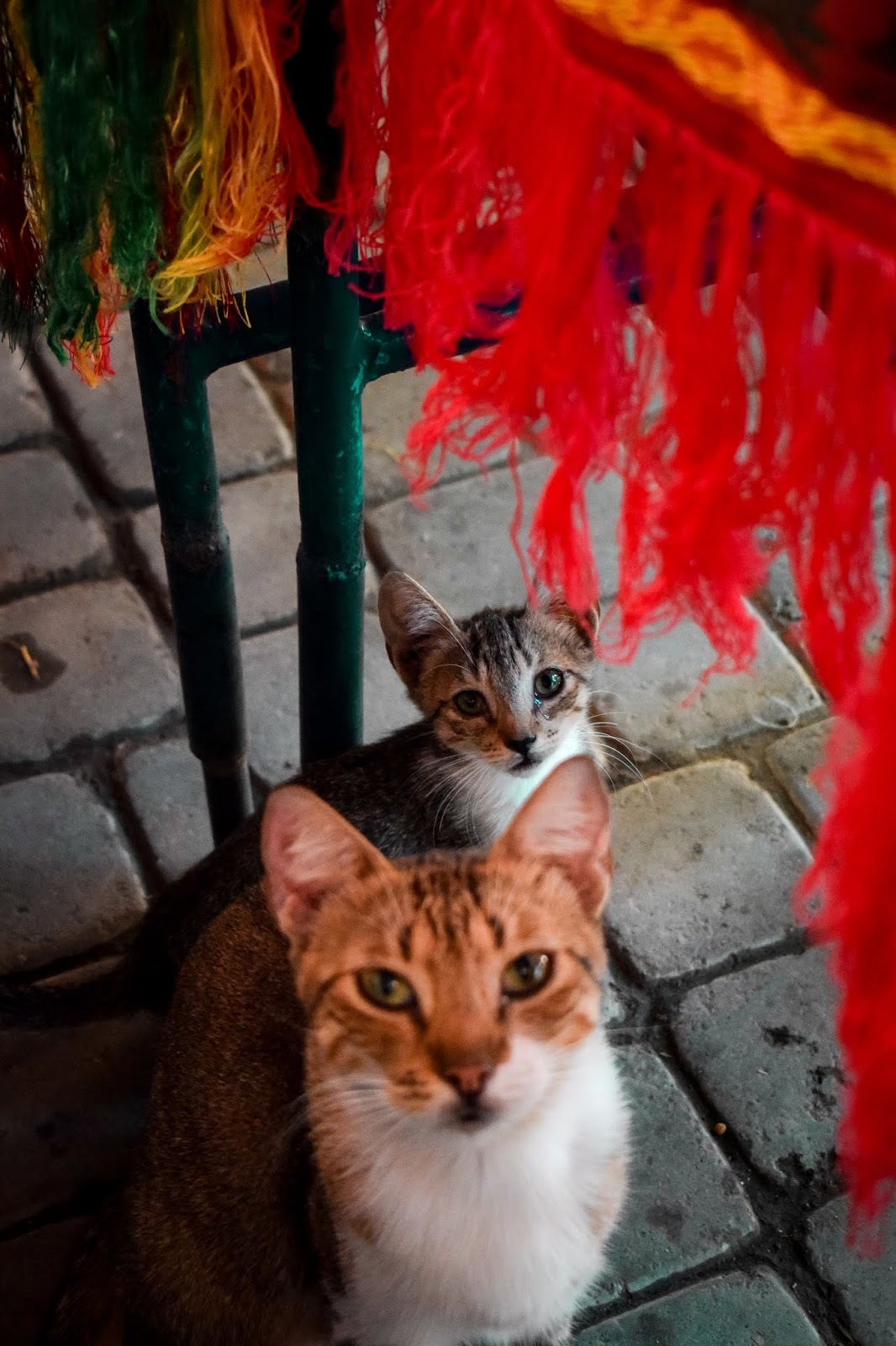 Kittens In Marrakech