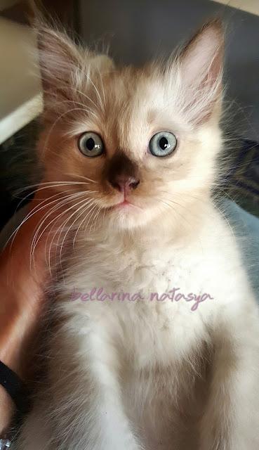 Anak Kucing Makan Ubat