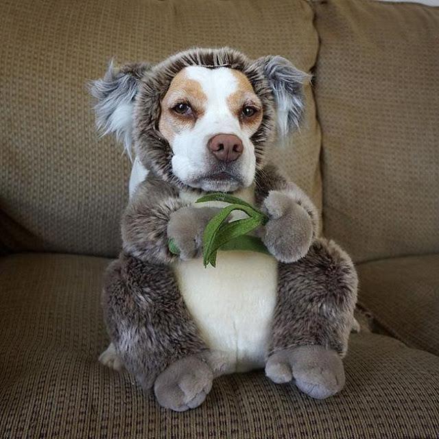 Đến fashionista cũng phải ngả mũ vì style thời trang của chú chó này
