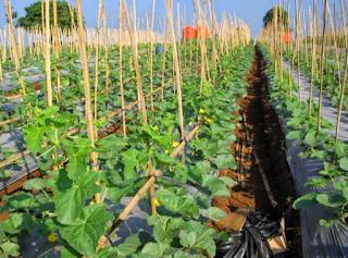 Pertanian Ramah Ligkungan PPT