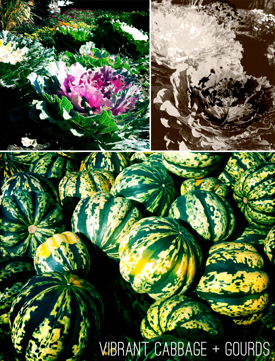 cabbage and gourds