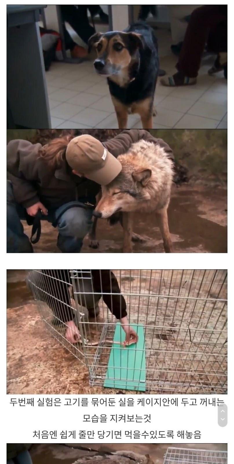 개와 늑대의 차이