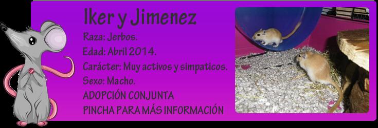 http://almaexoticos.blogspot.com.es/2014/08/iker-y-jimenez-jerbitos-en-adopcion.html