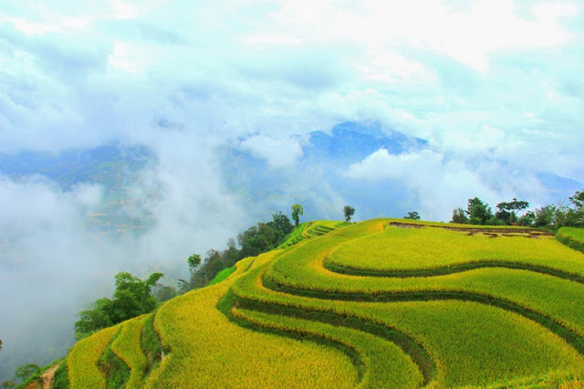 Cross the slope pass to Phung village to see the ripe rice paddies 5